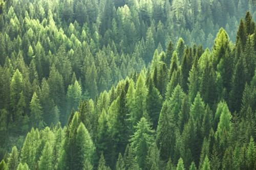Anwendung Forstwirtschaft
