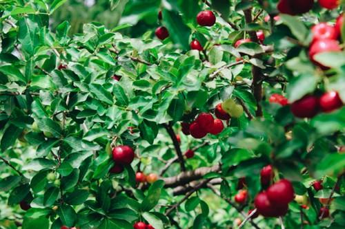 Anwendung Obstbau