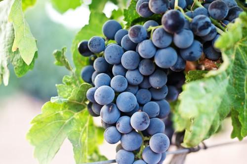Anwendung Weinbau